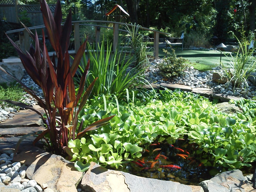Water features and koi ponds sycamore landscaping inc for Koi pond plants